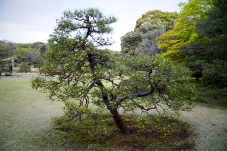004_Rikugien Garden_04102013