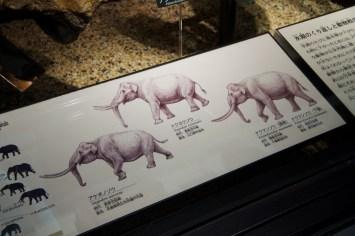 Elephant (ぞう!)