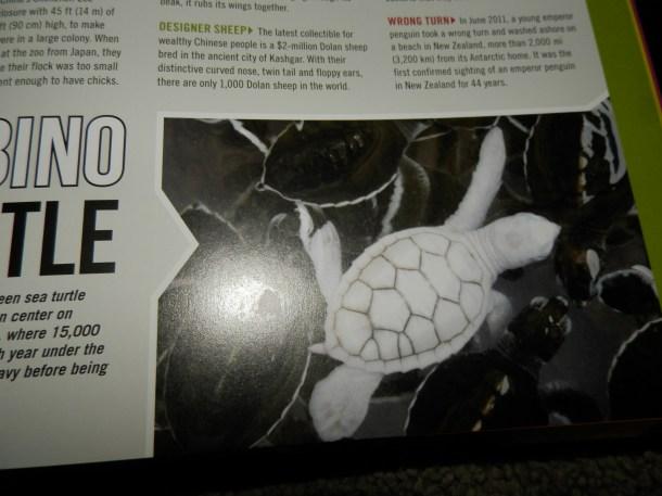 The Albino Turtle