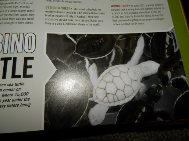The Albino Turtle