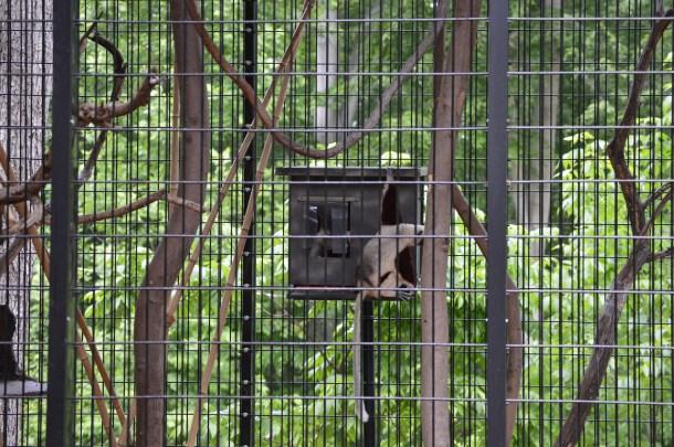 Maryland Zoo (31)