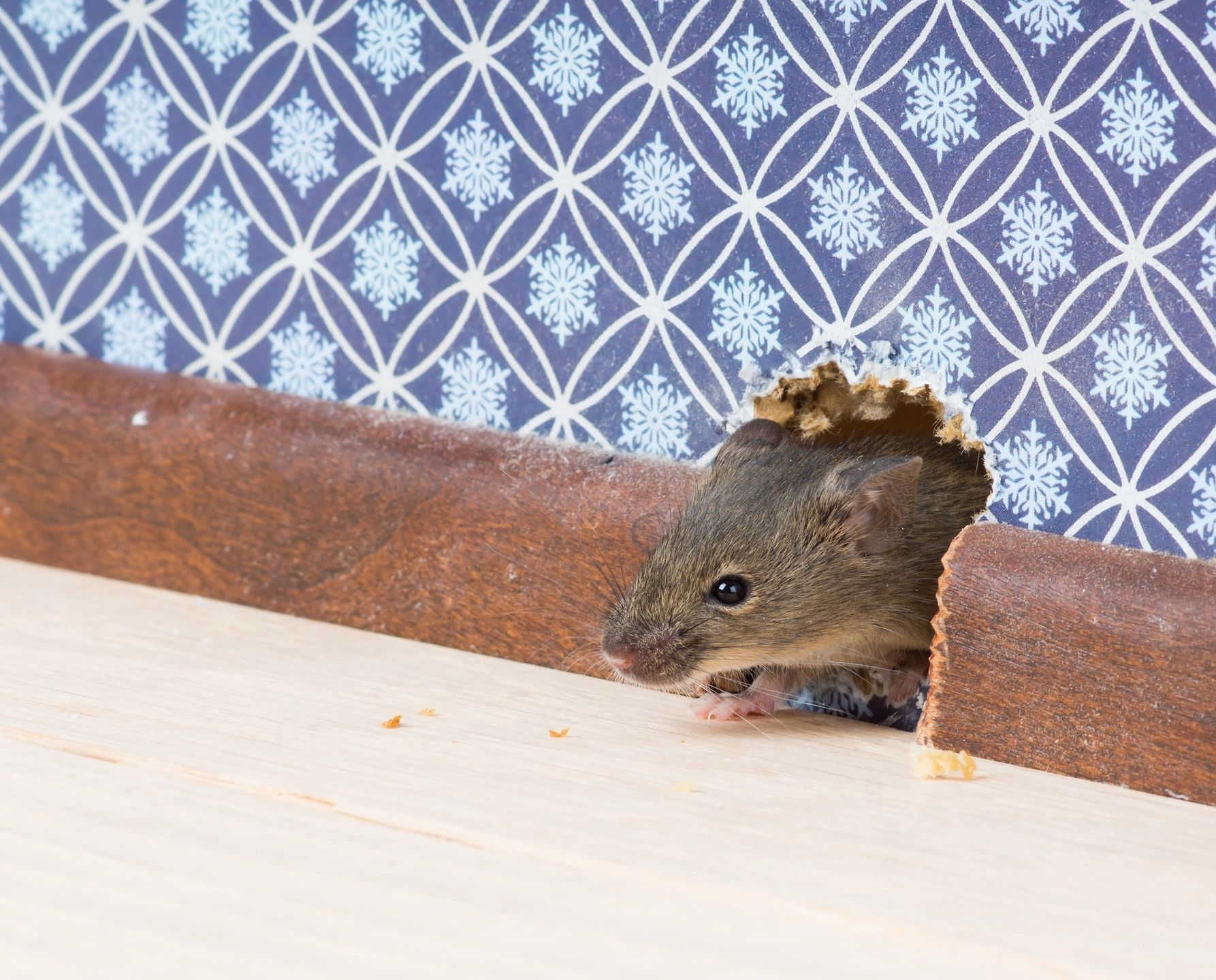 The 5 Best Ways of Getting Rid of Rodents