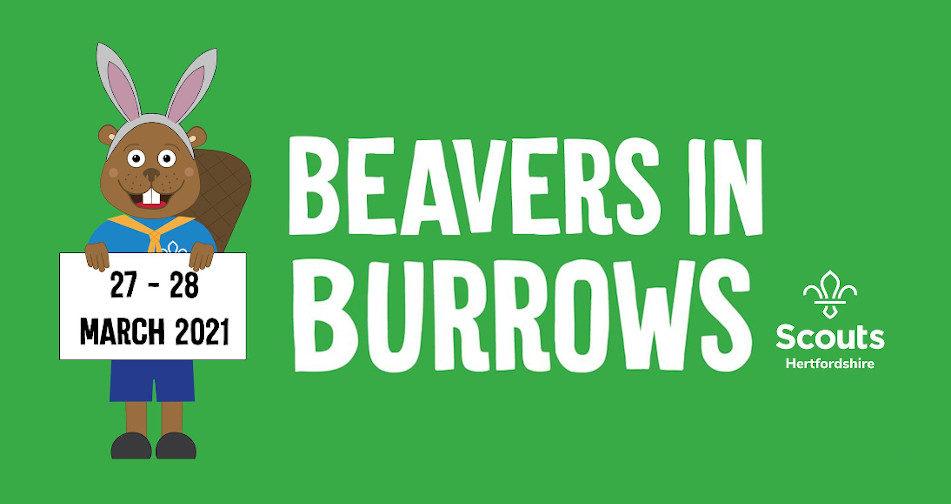 Beavers in Burrows 2021
