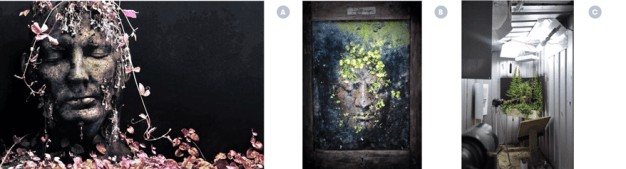 While researching visual relationships between identity & temporality for my Masters project I created and recorded degradable portraits hosting cycles of plant and insect life.