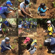 offsite-tree-planting