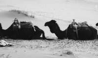 Beware of the first straw on the camel's back