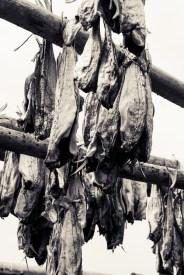 Wind dried fish