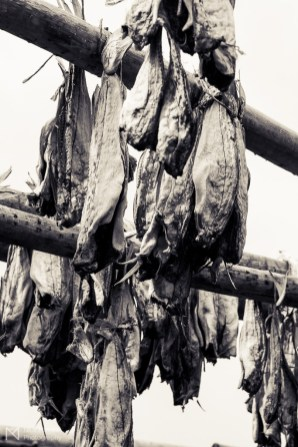 Wind dried fish