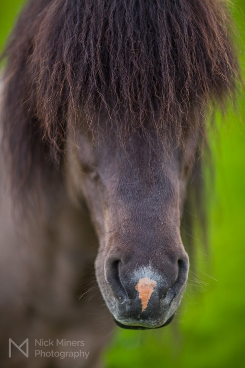 Stallion portrait