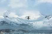 A seabird at Jökulsárlón