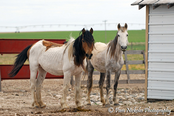 El Mariachi and Hope at Dr. Tom's farm - 5-16-2009. One month into their recovery.