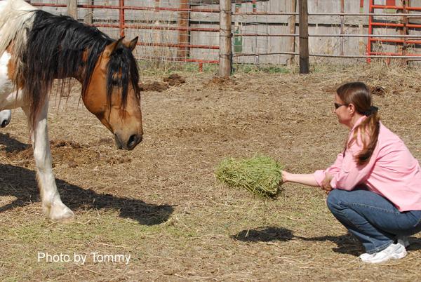 Me offering El Mariachi a flake of hay. 5-24-2009