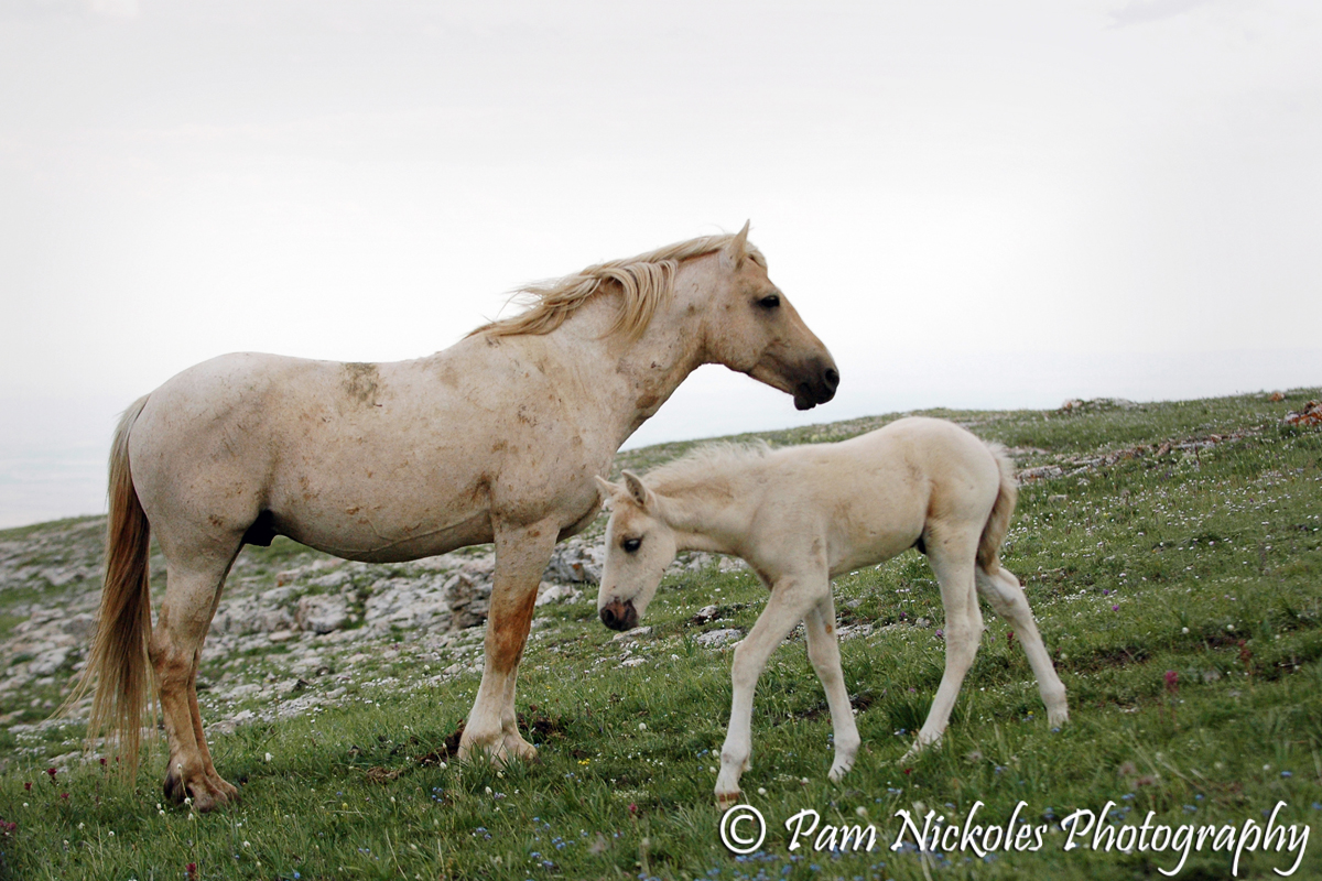 Cloud and his grandson, Image - 2008