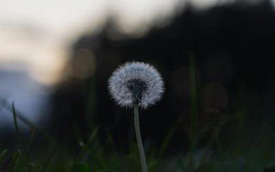 A simple noticing meditation