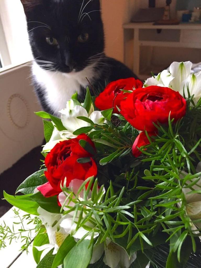 Kater Fred und die Vodafone-Blumen