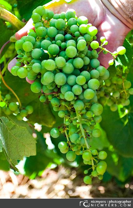 Vineyards: Penedès Wine Region, Spain