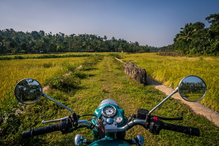 Rice fields and the missing bull in Kalpetta.