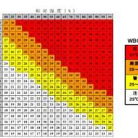 【熱中症】暑さ指数(WBGT)について知る~熱中症の予防と対策に!