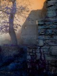 Image: Tree in Castle Ruins