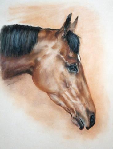 Horse head in pastel