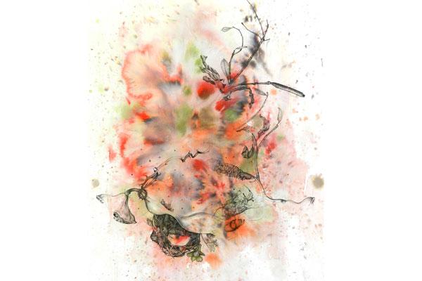 Lotus, Banksia and Pelvis