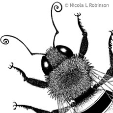 Pen and Ink Bee Illustrations © Nicol L Robinson