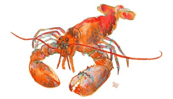 lobster watercolour and mixed media illustration by Nicola Schofield