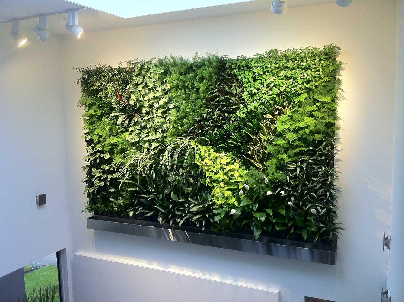 Succulent Plants Sale Uk