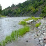 rieka plná lososov