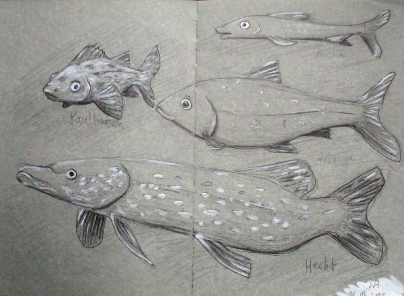 Sketches from an Aquarium in Belgium