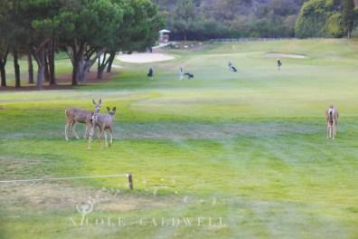 laguna beach wedding aliso greek golf course photos by Nicole Caldwell 960