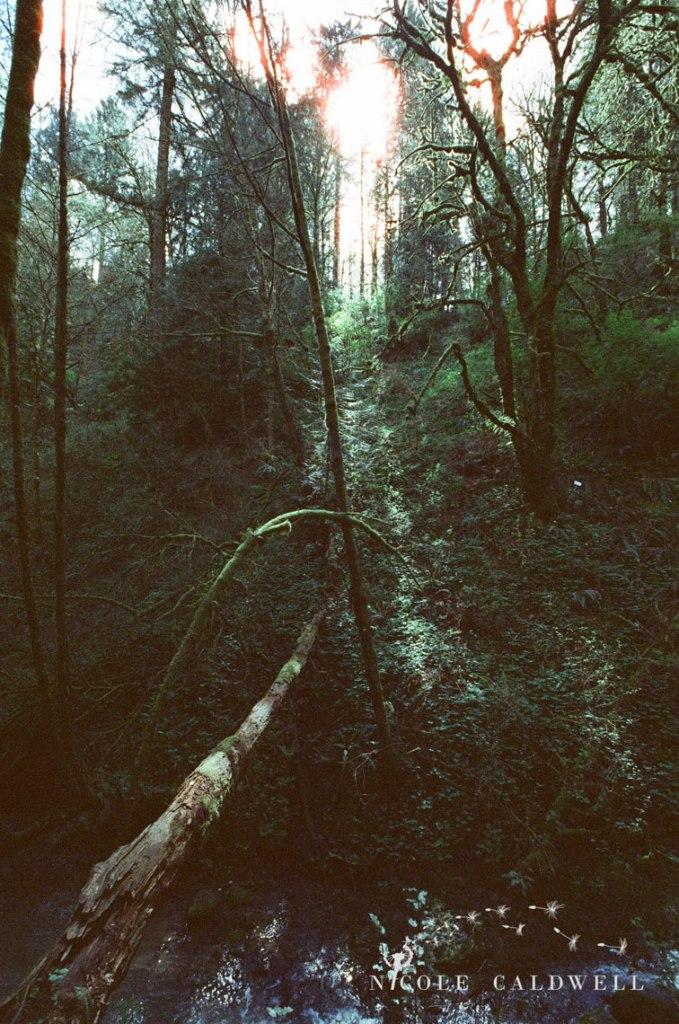 cinestill_film_forest_park_portland06