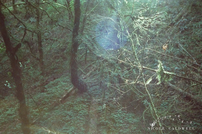 cinestill_film_forest_park_portland07