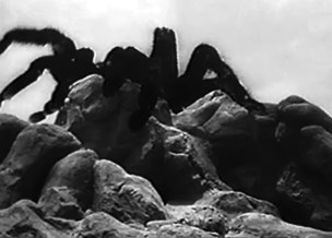 Tarantula1955_h494