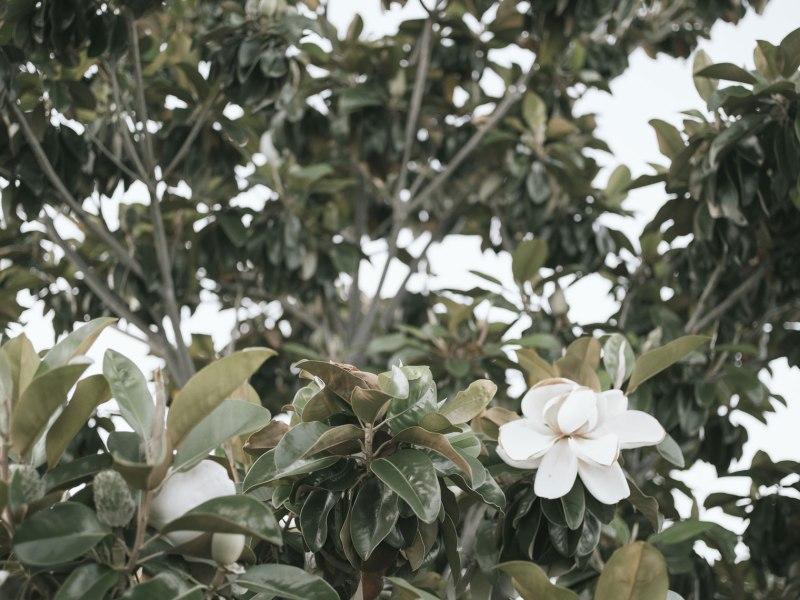 pentax-645z-magnolia_nicole-Caldwell_210