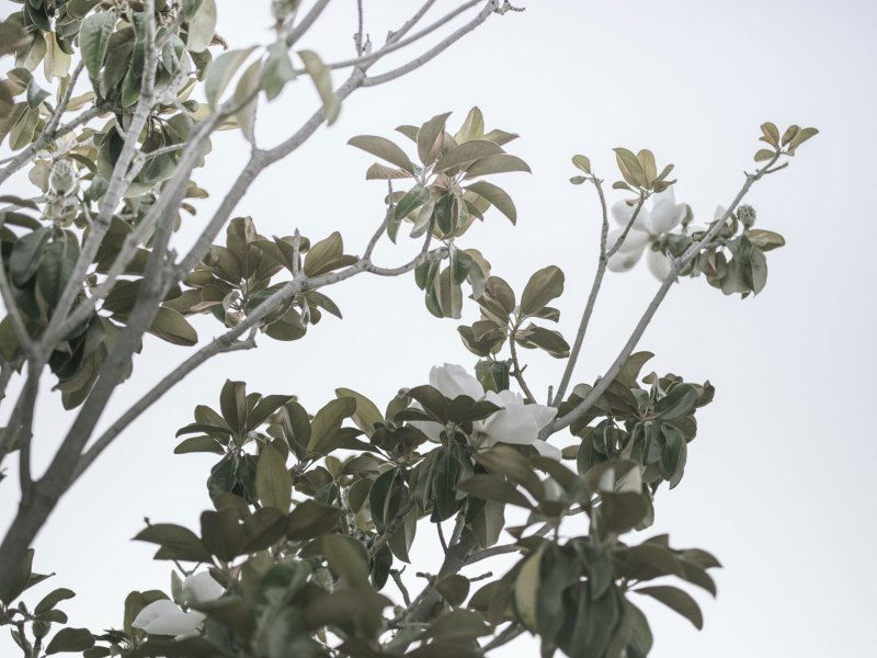 pentax-645z-magnolia_nicole-Caldwell_216