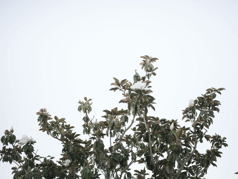 pentax-645z-magnolia_nicole-Caldwell_221