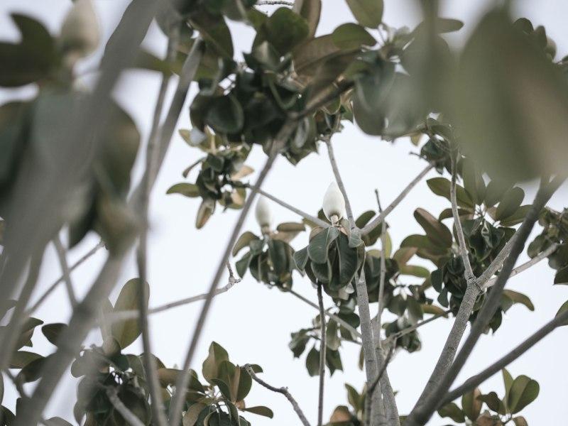 pentax-645z-magnolia_nicole-Caldwell_230