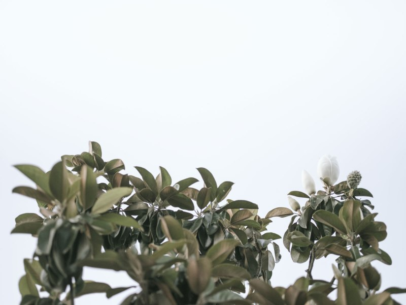 pentax-645z-magnolia_nicole-Caldwell_234