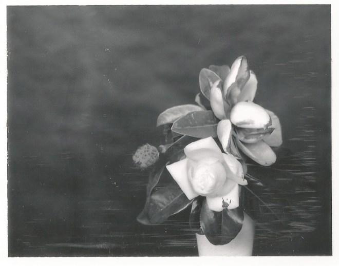 type 55 nicole caldwell polaroids