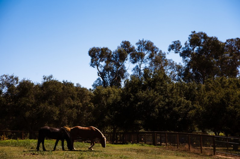 heartstone ranch weddings santa barbara capernteria nicole caldwell destination wedding photographer 02