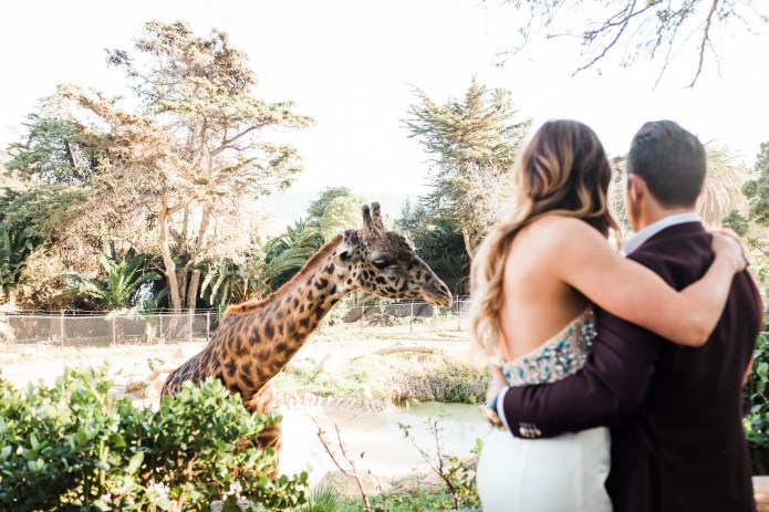 santa barabar zoo wedding and engagement pictures by nicole caldwell 38