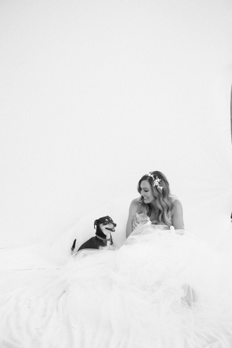 bride and groom with dogs nicole caldwell photographer weddings _05