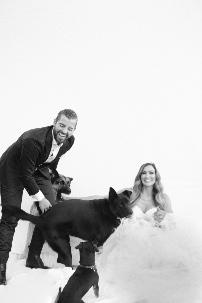 bride and groom with dogs nicole caldwell photographer weddings _14