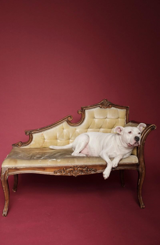 dog pet photographer nicole caldwell 02