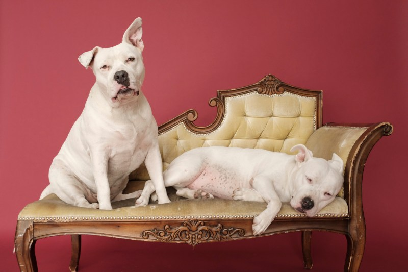dog pet photographer nicole caldwell 06