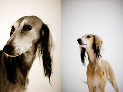 dog_photography_orange_county_by_nicole_caldwell_01.jpg