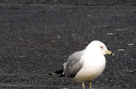 birdhungry