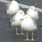 flockbirds