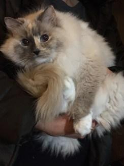 Cat ft. Mom's hands